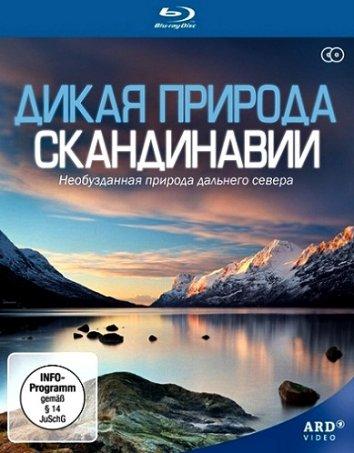 Смотреть Дикая природа Скандинавии онлайн в HD качестве 720p