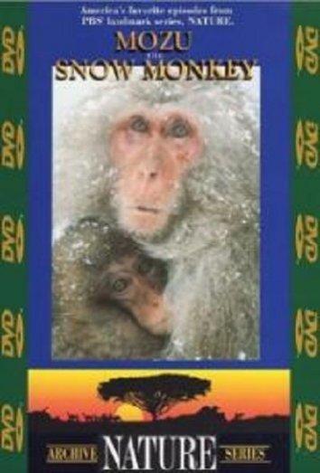 Смотреть Природа (сериал 1982 ...) онлайн в HD качестве 720p