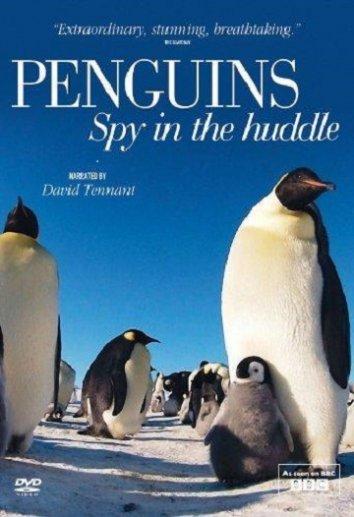 Смотреть Пингвины: Шпион в толпе онлайн в HD качестве 720p