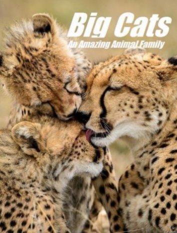 Смотреть Кошки: Удивительная звериная семейка онлайн в HD качестве 720p